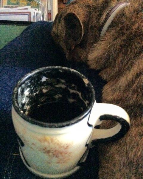 Coffee and the sleeping dog