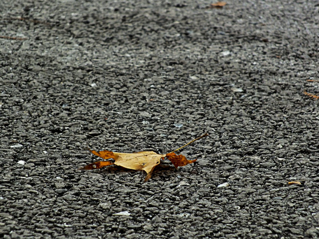 Dismal fall color