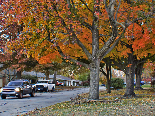 Fall Color on South Ferguson