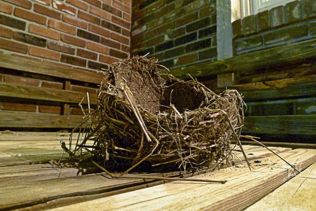 An abandoned bird's nest