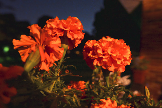 Marigolds on the front porch rail