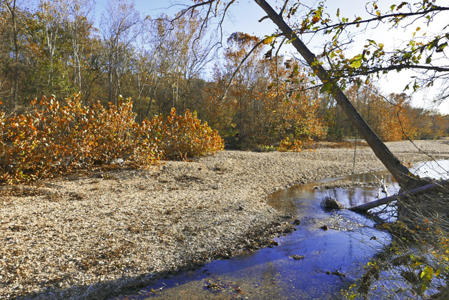 The lack of fall color on Swan Creek