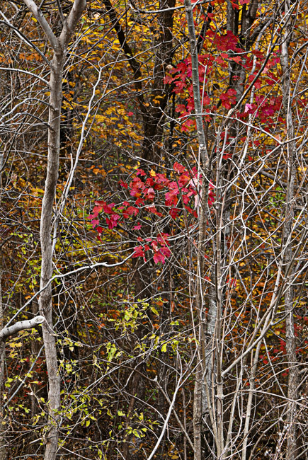 Fall color homage to Eliot Porter