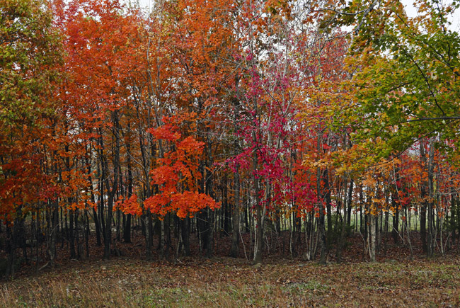 Understory color in the woods of Northern Arkansas