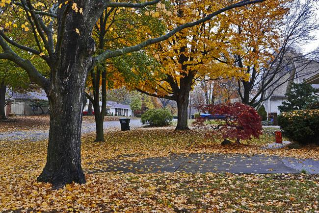 Past peak autumn splendor