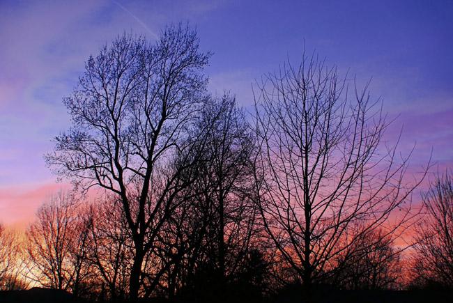Limb laced sunset