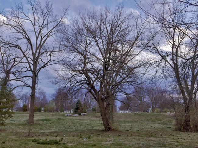 Walnut Lawn and Ferguson