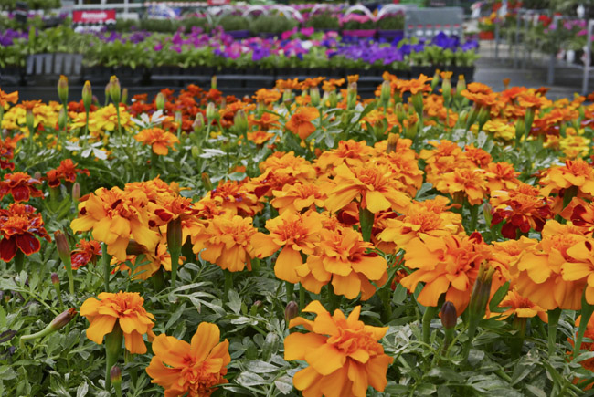 Parking lot annuals