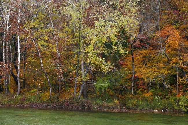 Fall Foliage on BullCreek