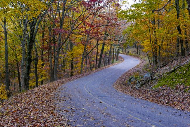 Fall color postcard, Christian County