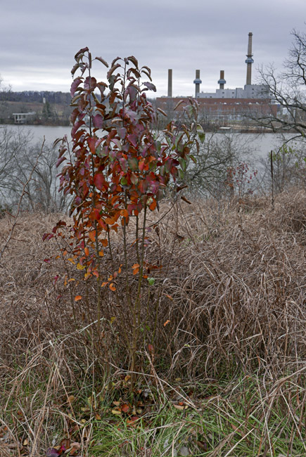 Late fall colour on Lake Springfield