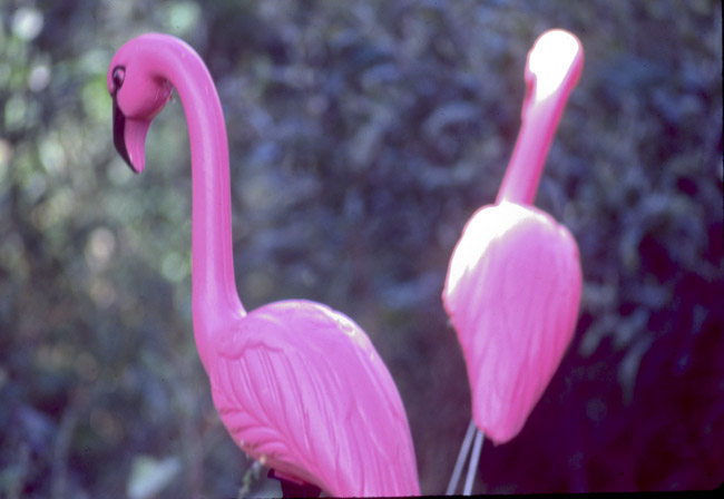 Pink Plastic Flamingos
